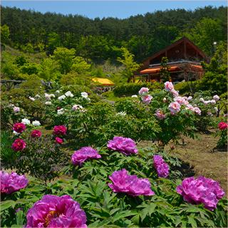 花と泉の公園 春まつり